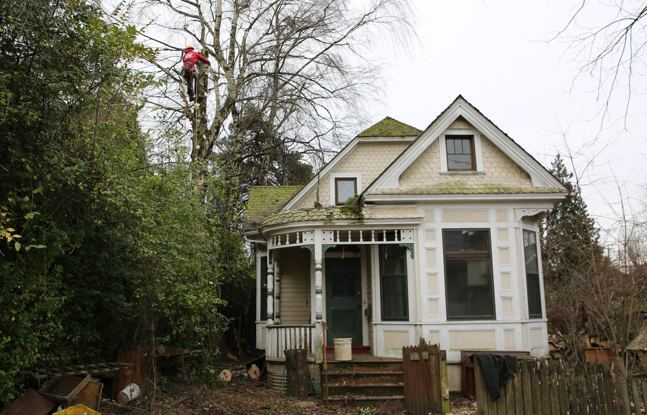 An arborist removes a tree to prepare the lot for the removal of the Mayo house and the construction of new town homes.