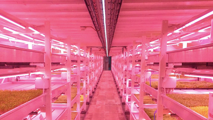 London Wartime Bunkers Offer Essential Vertical Farm Space