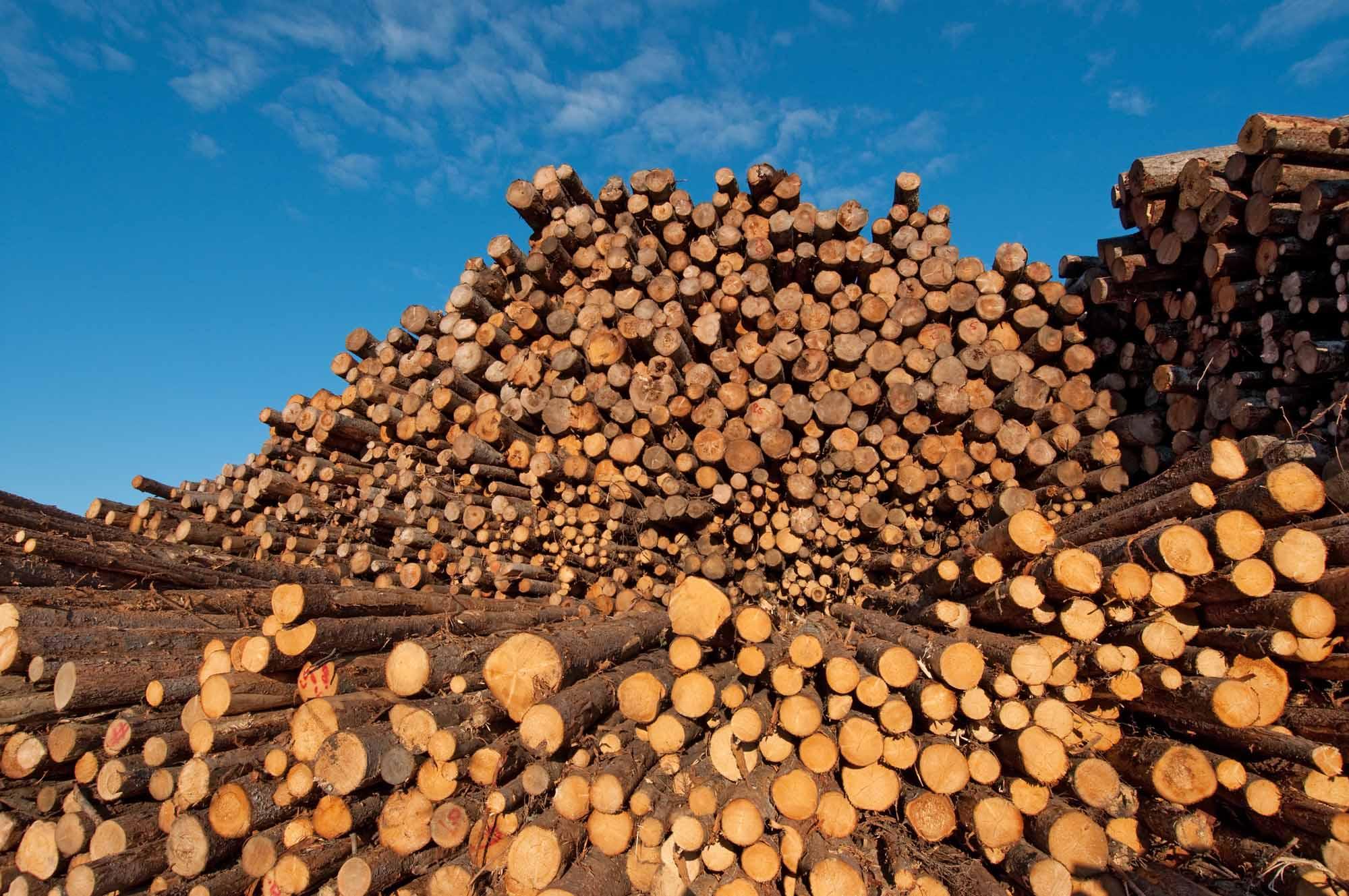 softwood-lumber-logs.jpg